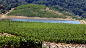 Imagen de Hillside Estate Vineyard. Shafer Vineyards