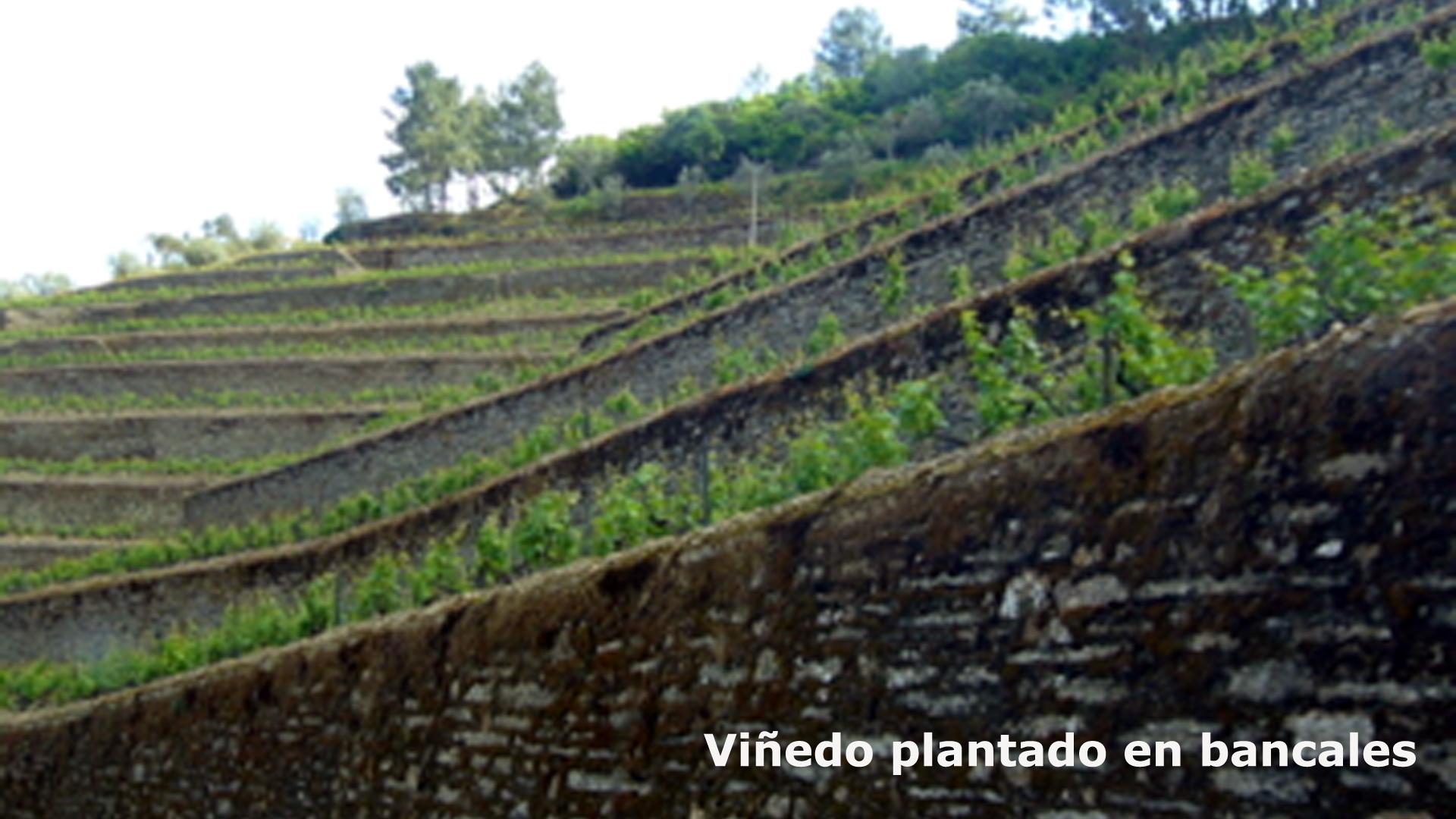 Sistemas de  Plantación en el Douro