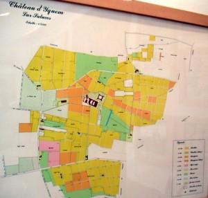 Château d'Yquem: mapa de los viñedos