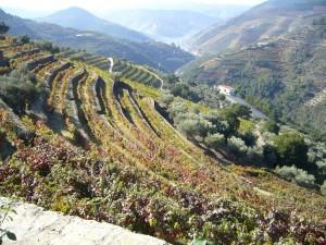 De los viñedos de Oporto salen vinos no tranquilos