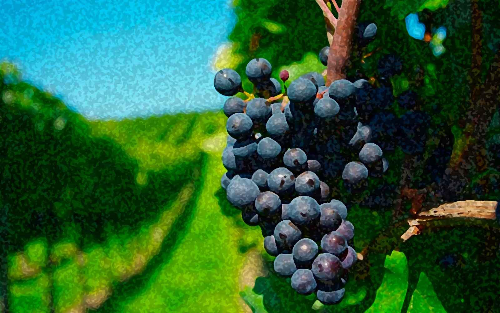 Frases sobre vino. Frases de personajes célebres.