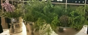 Imagen. Vegetación de la finca donde se asientan los viñedos de Mas de Sella