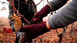 Winemakers de Autóctona del Bierzo. 2ª temporada de #weareauthentic, webserie sobre vinos del Bierzo