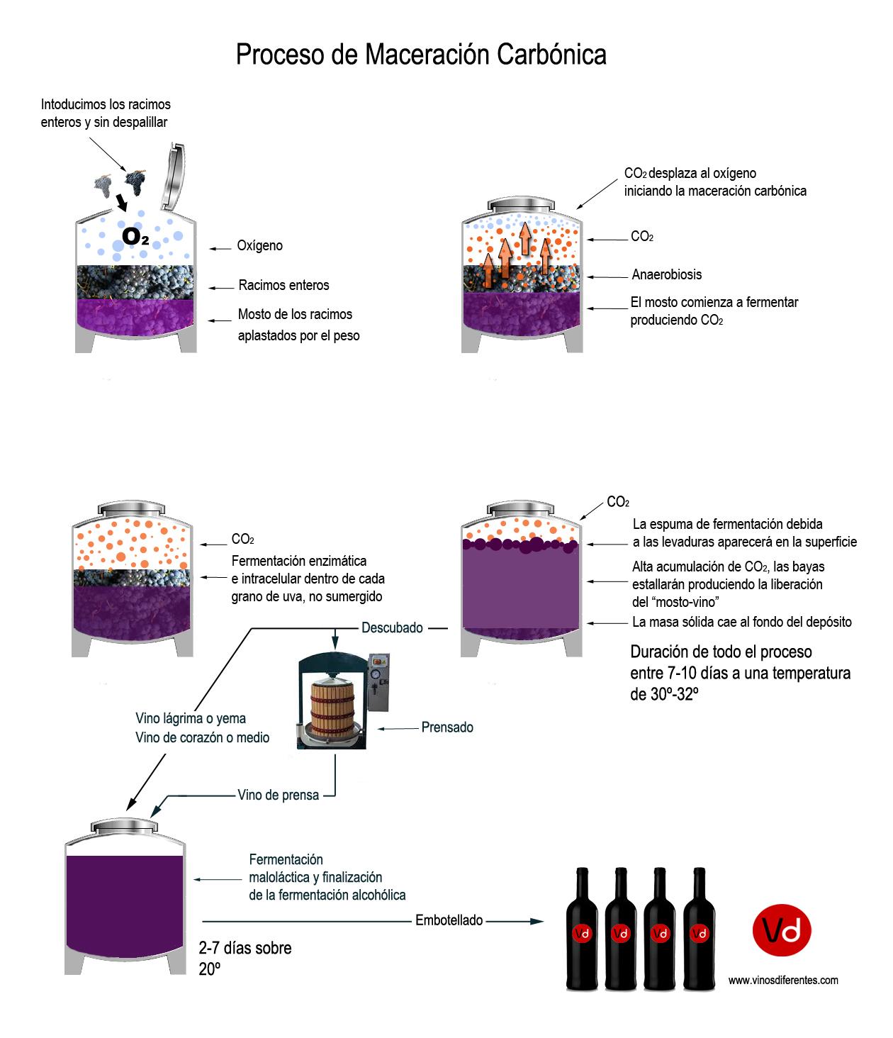 Carbonic >> ¿Qué son vinos de Maceración Carbónica?. Te lo explicamos.