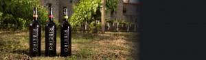 Los vinos de D.O. Ribeiro