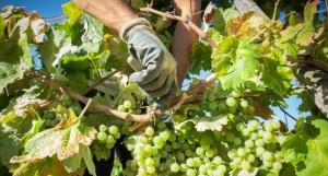 imagen vinos de jerez