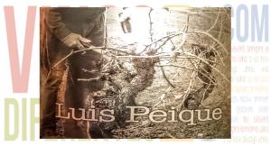 Imagen. Luis Peique 2009