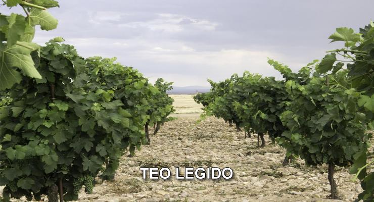Teo Legido: El Vino como Arte en La Moraña - VINOS DIFERENTES