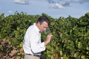 imagen actividades, ruta del vino de rueda