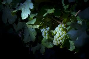 imagen vendimia nocturna, ruta del vino de rueda