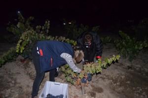 Imagen vendimia nocturna en Bodegas Pagos de Leza