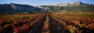 Foto. Camino Ignaciano. Enoturismo. Ruta del Vino de Rioja Alavesa