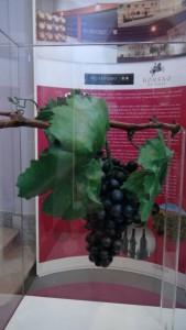 Bodegas Borsao y Alto Moncayo apadrinan la variedad de uva Garnacha Tinta.