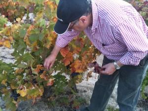 Imagen. Bodegas El Lagar de Isilla ha preparado un exclusivo programa dedicado al vino para vivir la ´Experiencia Vendimias´