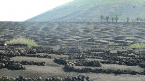 Imagen. Paisaje de viñedos de La Geria (Lanzarote)