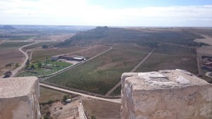Imagen. Viñedos en Castillejo del Duero en plena Ribera del Duero vallisoletana