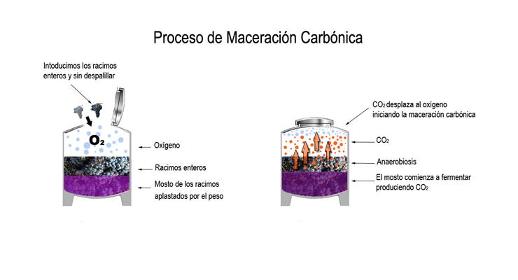 Maceración Carbónica. Viticultura y elaboración.