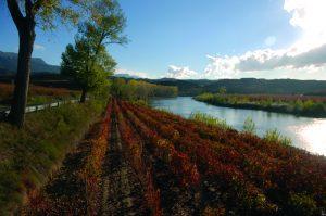 Imagen. Recibe el año nuevo entre viñedos con la Ruta del Vino Rioja Alavesa