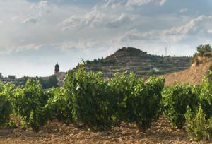 La Bastida Rioja. Vendimia