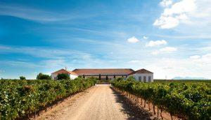 La Ruta del Vino Ribera del Guadiana