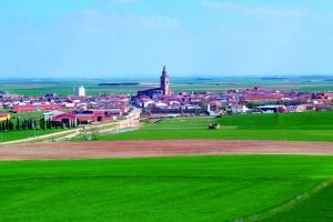 Imagen. La Ruta del Vino de Rueda colabora en el LXXVII Campeonato de España de galgos