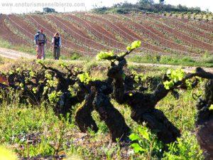 Imagen. La Ruta del Vino del Bierzo renueva la certificación