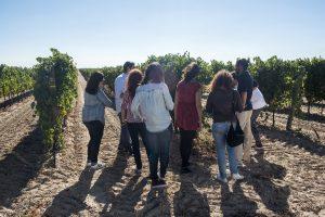 Esta semana santa, decántate por el enoturismo en La Ruta del Vino de Rueda