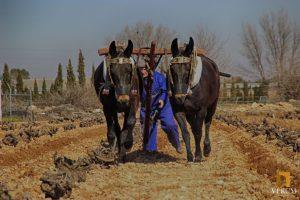Bodegas Verum apuesta por recuperar las tradiciones para sus viñedos ecológicos