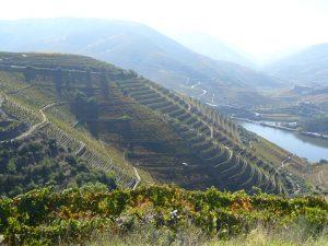 Imagen. Sorprendente paisaje de viñedos en las proximidades de la Quinta do Noval.
