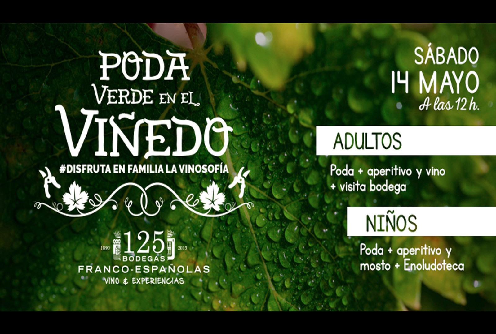 Poda verde en el Viñedo. Bodegas Franco – Españolas.