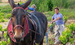 Curso de Agricultura Ecologica kirios de adrada
