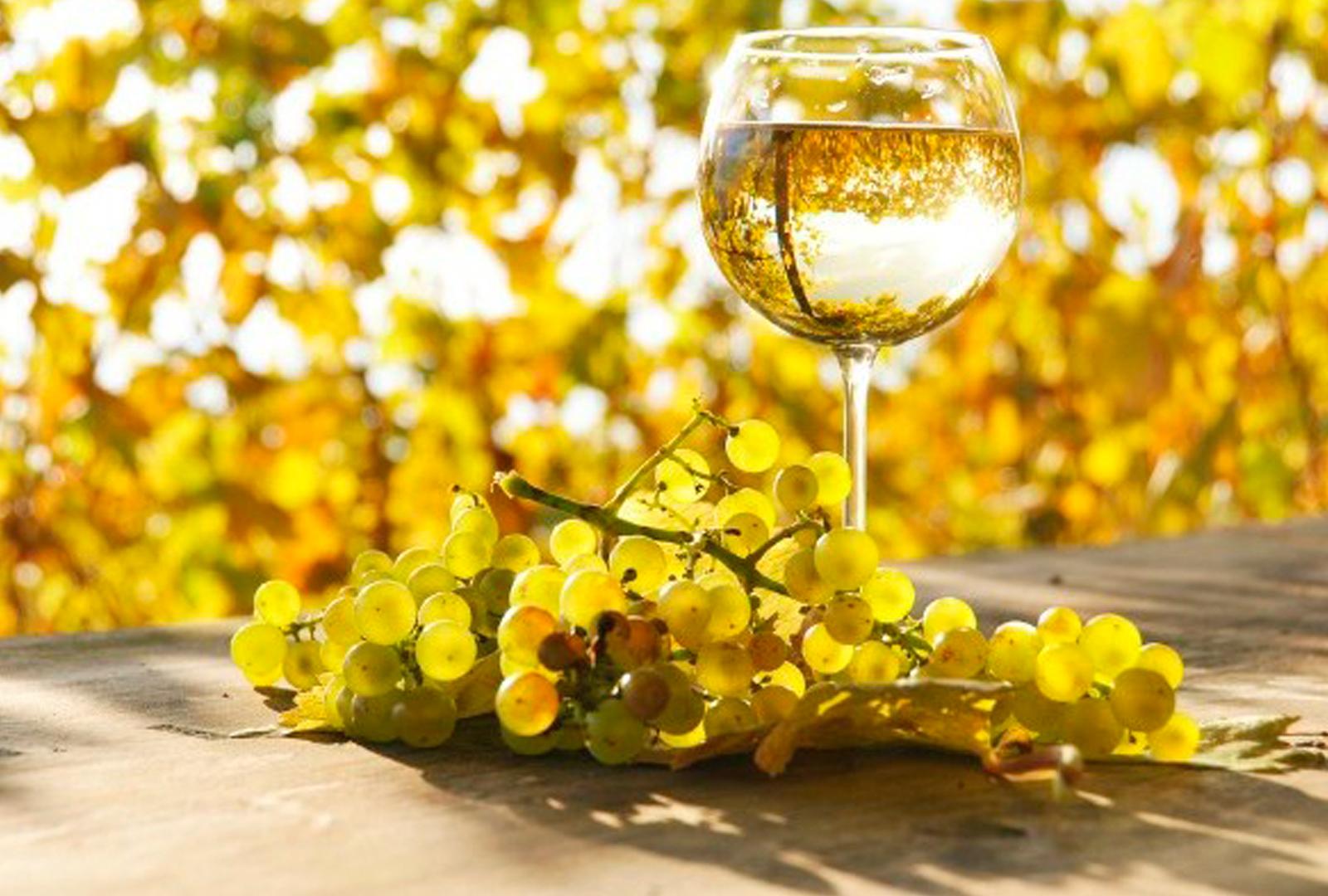 El vino blanco: el proceso de elaboración.