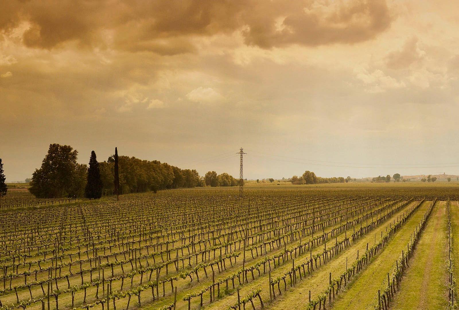 Castell del Remei apuesta por los vinos blancos.