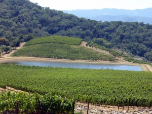Imagen. Viñedos de Shafer Vineyards en el californiano Valle de Napa (Estados Unidos de América).