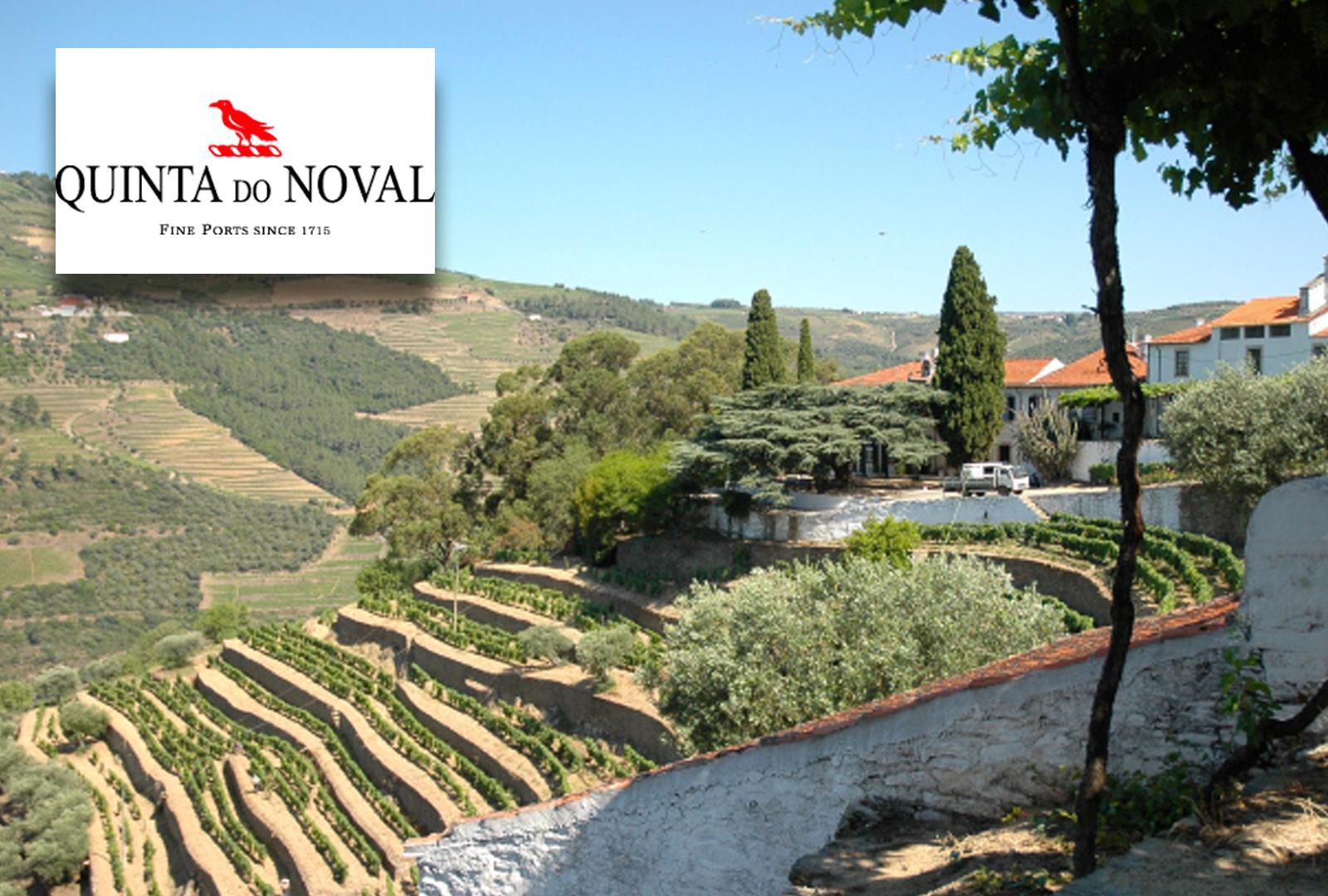 Quinta do Noval (II): Crítica de los Vinos.