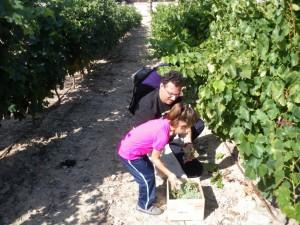 Vendimia en familia de Bodegas Franco Españolas