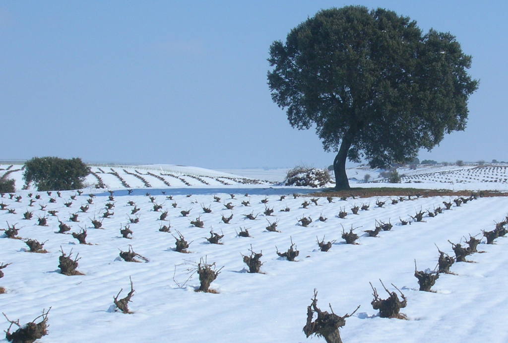 El espíritu navideño invade la Ruta del Vino de Rueda - VINOS DIFERENTES