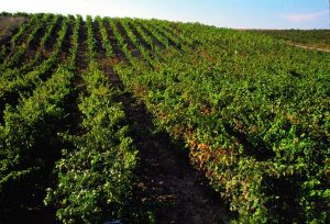 Viñedos de La Rioja Alta, S.A.