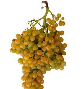 Racimo de uva malvasía.