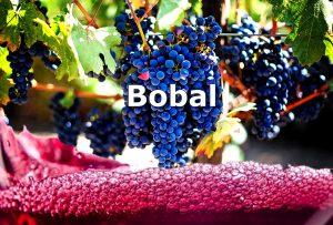 grape variety bobal