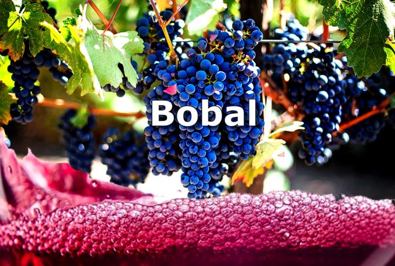 variedad uva bobal