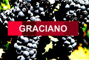 variety graciano