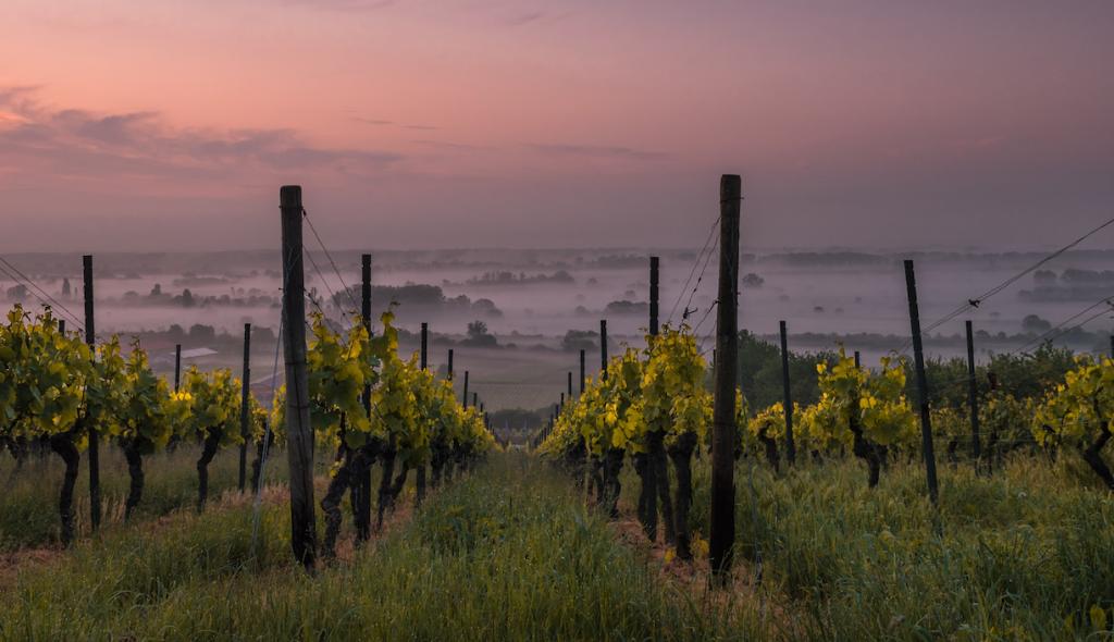 ¿Qué significa el término vinos enterrados? - Vinos Enterrados en España